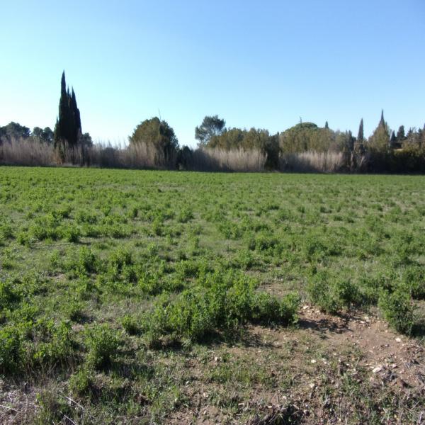 Offres de vente Terrain Saint-Rémy-de-Provence 13210